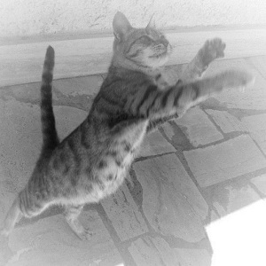 jumping cat luna