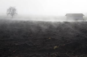 fog-66269